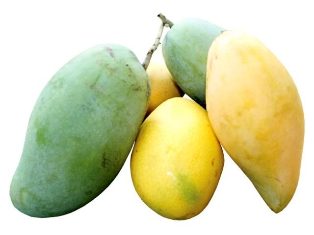 mangonun faydalari
