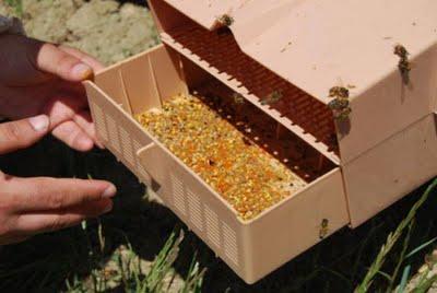 arı poleninin faydaları