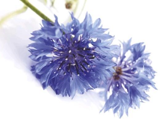 peygamber çiçeğinin faydaları