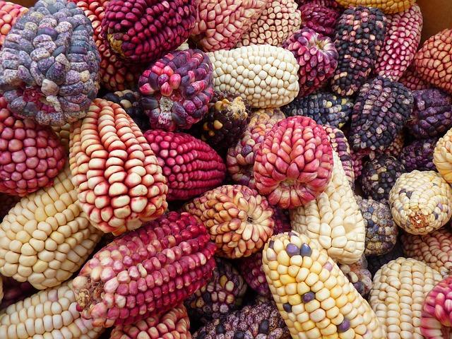 mısırın faydaları
