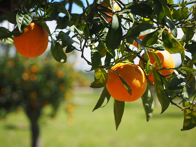 portakalın faydaları