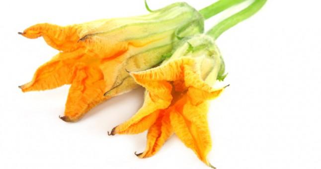 kabak çiçeğinin faydaları